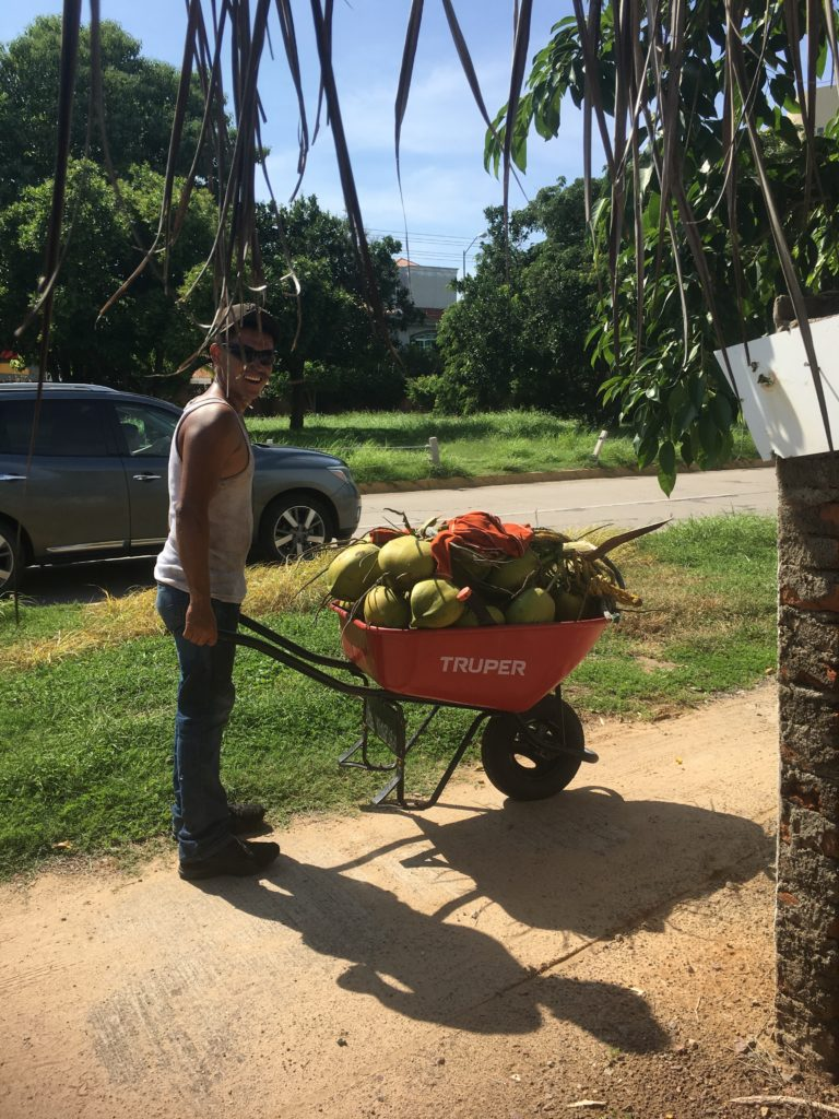 Fresh Mexican coconuts right off the tree